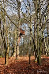 Domček v lese.