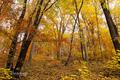 Jeseň v lese 2.
