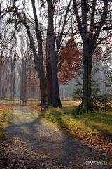 V starom lese.