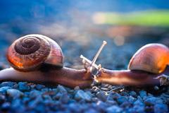 Snail's love