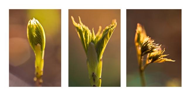 májový triptych