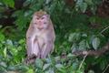 Opičiak :-)