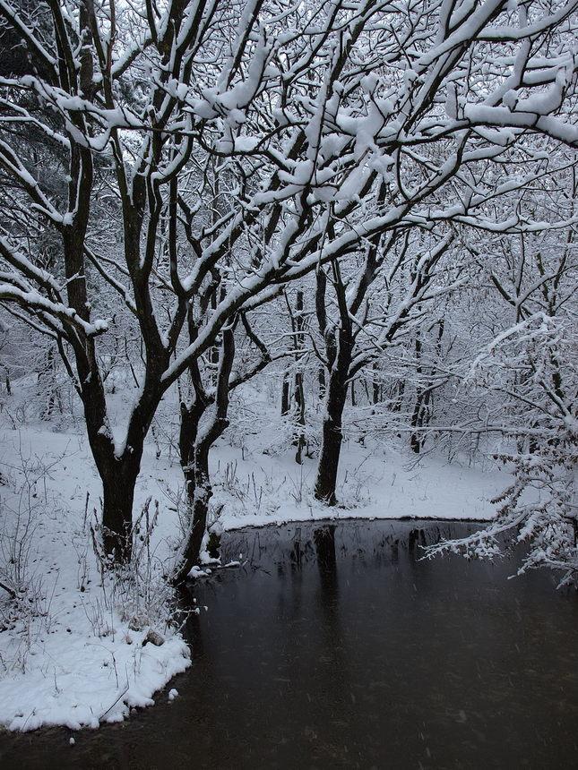 jazierko za snehu