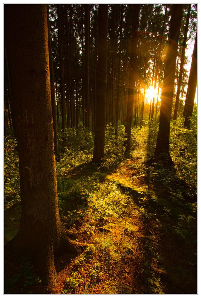 Cesta za svetlom