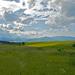 Polia a hory II