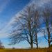 Stromy...