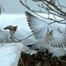 Anjelske krídla....