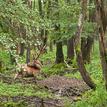 Ako v skutočnom lese