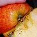 Moje jabĺčko