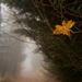Súdržnosť lesu