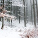 Les na Poľane