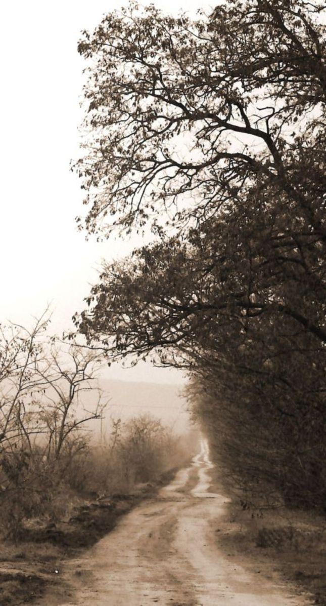 cesta do prirody