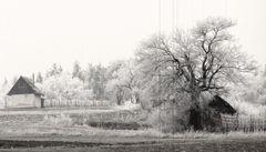 pri lese....v čierno-bielej
