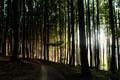 Lesom