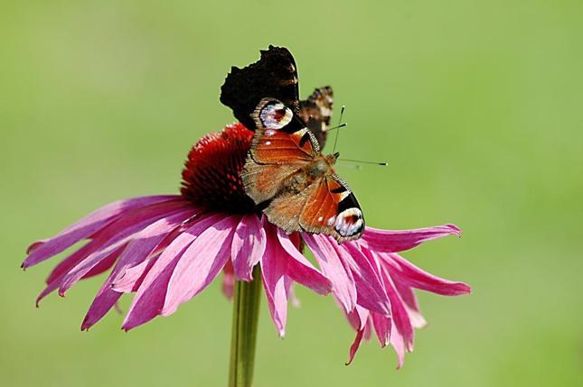 Motýlik 2
