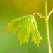 listovka