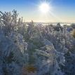 Snehove kralovstvo