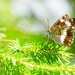 motýlčok 3