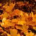 farebná jeseň