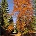 Jeseň v plnom  prúde