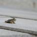 Žabka pod mostom