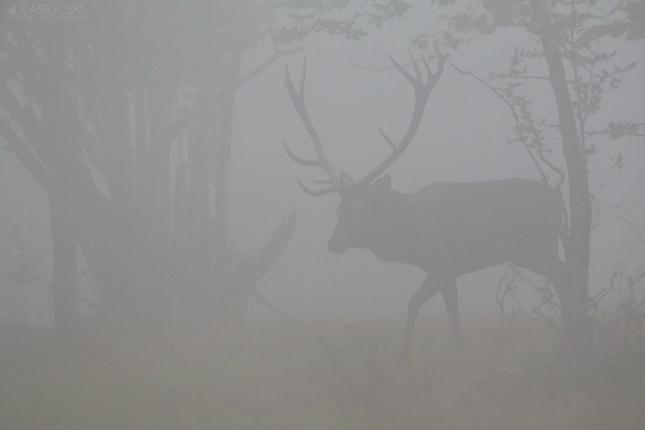 Prízrak hmly