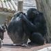 Opičia idyla