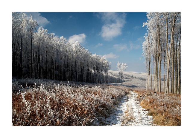 Karpatské chodníčky