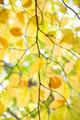 Jesenne vzory
