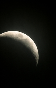 Young Moon