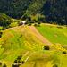 krajinka slovenska