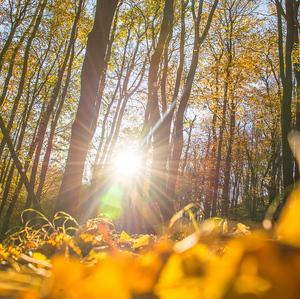 Jesenna.6