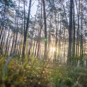 Rohoznicky.les