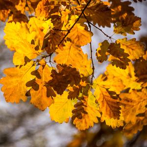 Jesenne farbicky