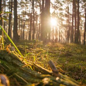 Lesne.prebudzanie