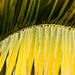 Palmovy list