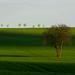 Jarna zelena