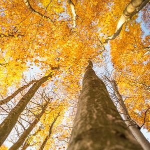 Jesenna.3