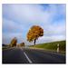 Strom po ceste