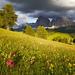 Alpská louka