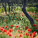 Olivový háj
