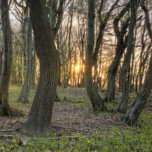 Cez stromy