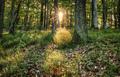 v lese pri východe slnka