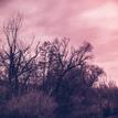 #2 Zimné Stromovanie