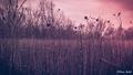 #1 Zimné Stromovanie