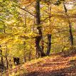 Cestou v jesenných lúčoch 2