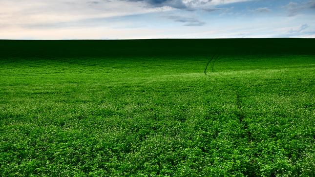 všade zelená