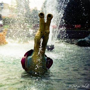 vodný slimák
