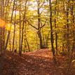 Cestou v jesenných lúčoch
