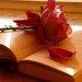 kniha s ružou